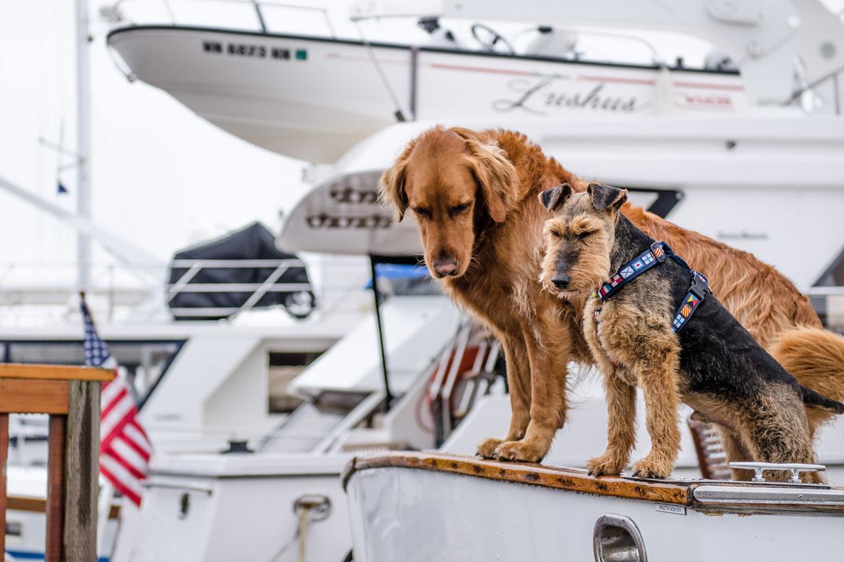 Wuff: Hunde an Bord