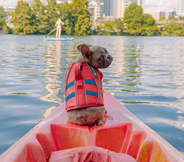 Hund in Hundeschwimmweste